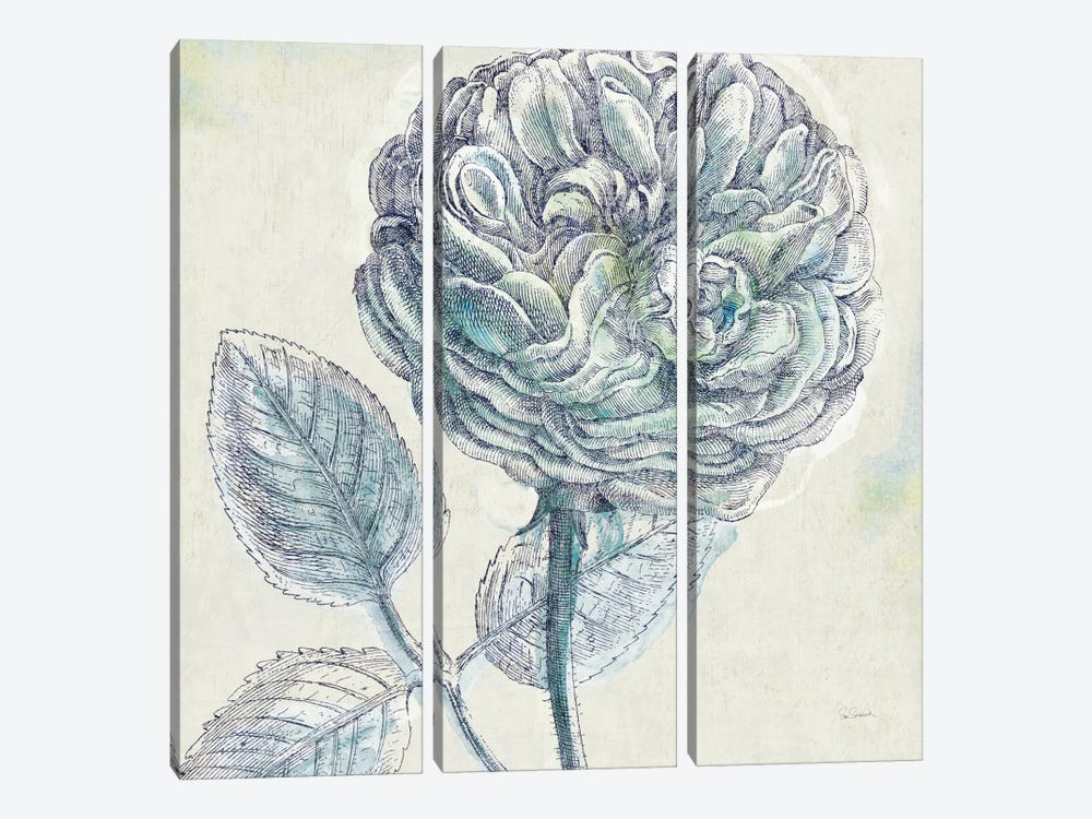 Belle Fleur III by Sue Schlabach 3-piece Canvas Artwork