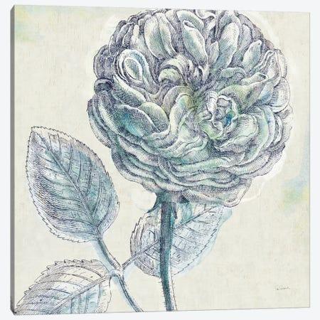 Belle Fleur III Canvas Print #WAC3948} by Sue Schlabach Canvas Print