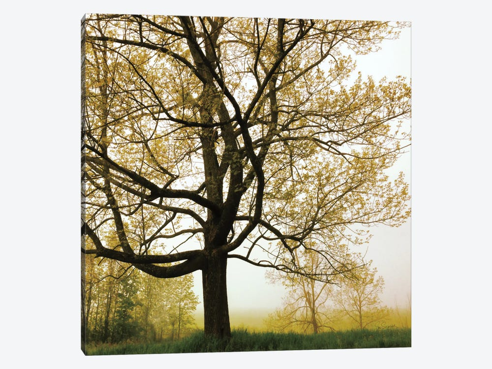 Morning Tree by Sue Schlabach 1-piece Canvas Wall Art