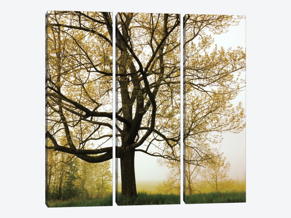 Morning Tree 3-piece Canvas Artwork