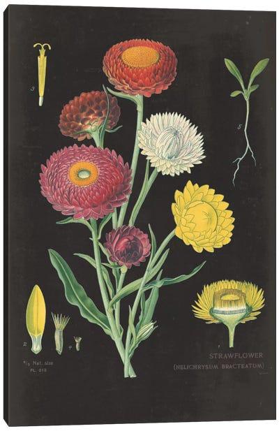 Strawflower Chart Canvas Print #WAC3961