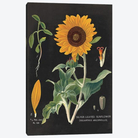 Sunflower Chart Canvas Print #WAC3962} by Sue Schlabach Canvas Print