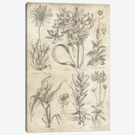 Eden Antique Bookplate I Canvas Print #WAC3972} by Wild Apple Portfolio Canvas Art