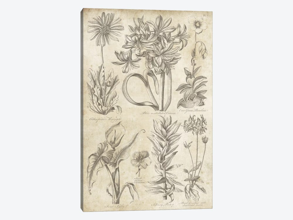Eden Antique Bookplate I by Wild Apple Portfolio 1-piece Canvas Print