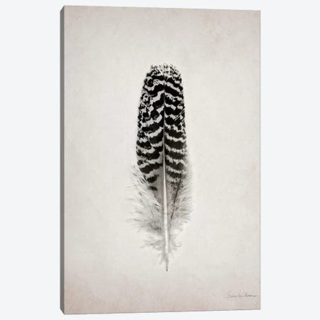 Feather I Canvas Print #WAC4032} by Debra Van Swearingen Canvas Wall Art
