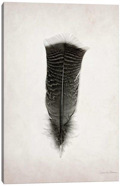 Feather III Canvas Art Print