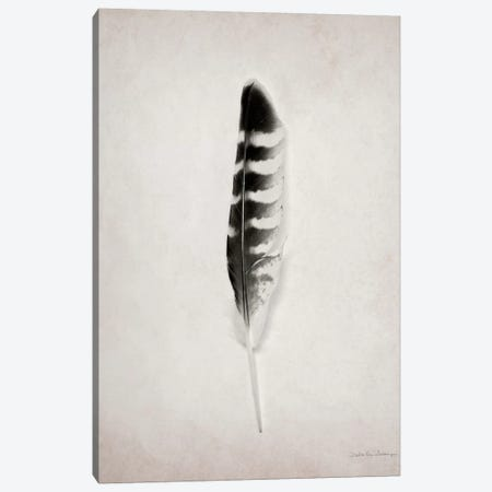 Feather IV Canvas Print #WAC4035} by Debra Van Swearingen Canvas Print