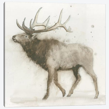 Elk Canvas Print #WAC4037} by James Wiens Canvas Art Print