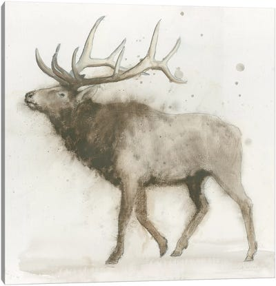 Elk Canvas Art Print