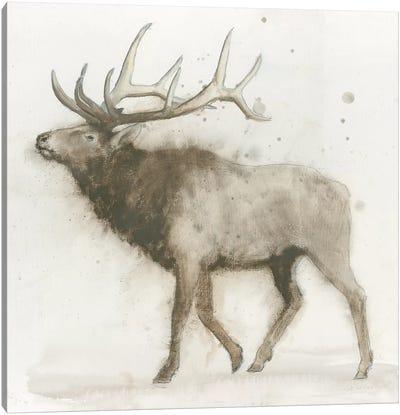 Elk Canvas Art Print