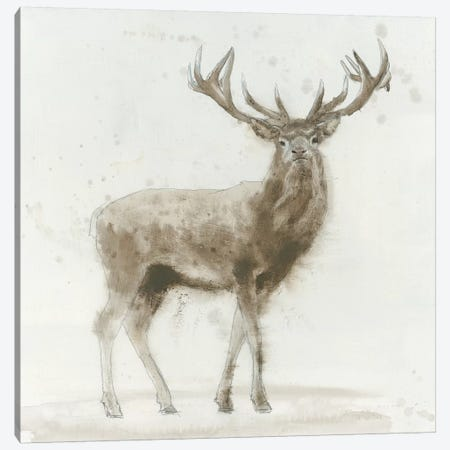 Stag V.2 Canvas Print #WAC4038} by James Wiens Canvas Art