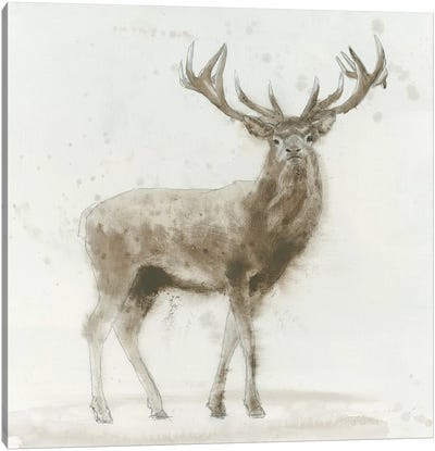Stag V.2 Canvas Art Print