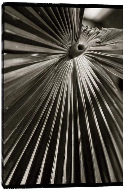 Palm Frond I Canvas Art Print