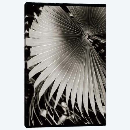 Palm Frond II Canvas Print #WAC4196} by Debra Van Swearingen Canvas Artwork