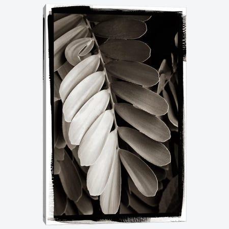 Tropical Plant I Canvas Print #WAC4197} by Debra Van Swearingen Canvas Wall Art