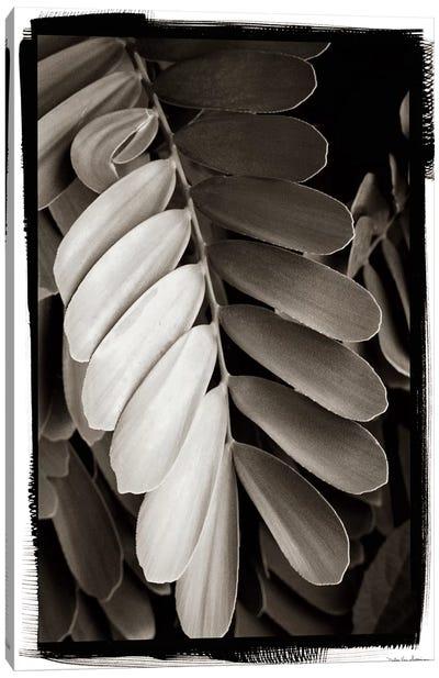 Tropical Plant I Canvas Art Print