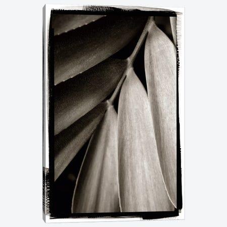 Tropical Plant II Canvas Print #WAC4198} by Debra Van Swearingen Art Print