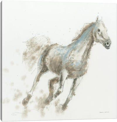 Stallion I Canvas Print #WAC4213
