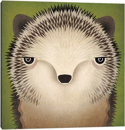 Baby Hedgehog Canvas Art Print