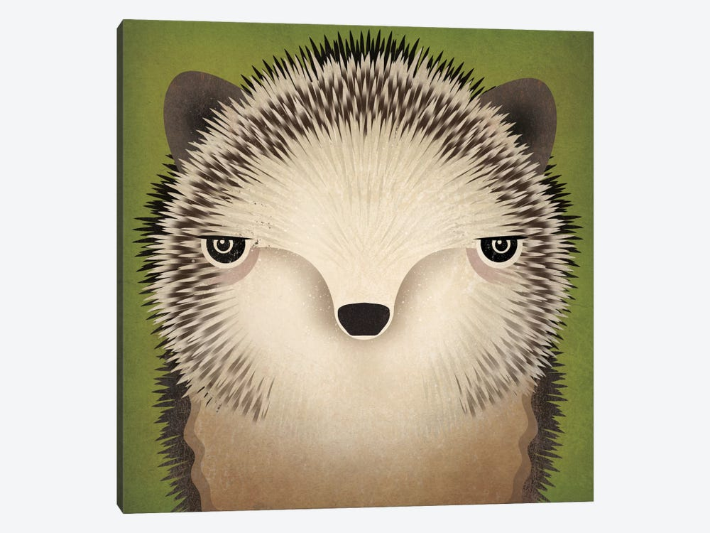 Baby Hedgehog by Ryan Fowler 1-piece Canvas Wall Art