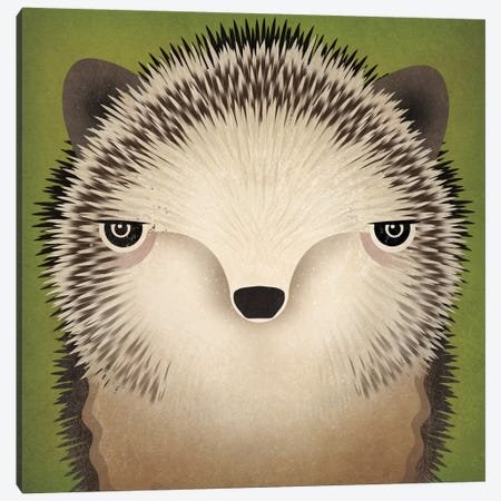 Baby Hedgehog Canvas Print #WAC4232} by Ryan Fowler Canvas Artwork