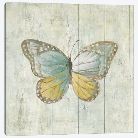 Natural Flora VI Canvas Print #WAC4342} by Danhui Nai Canvas Art