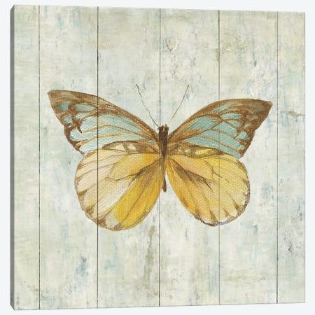 Natural Flora VIII Canvas Print #WAC4344} by Danhui Nai Canvas Print