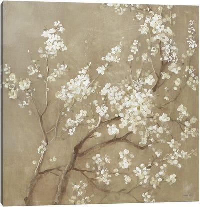 White Cherry Blossoms I Canvas Art Print