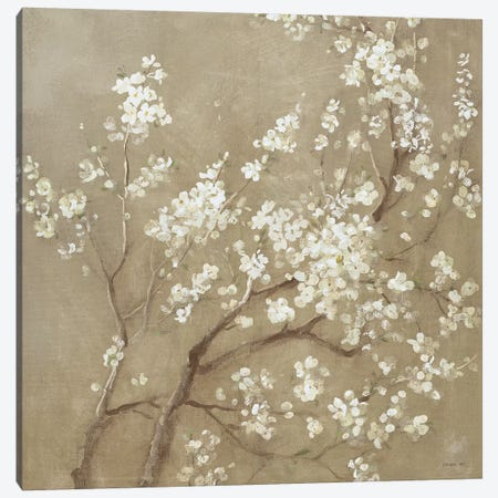White Cherry Blossoms I Canvas Print #WAC4353} by Danhui Nai Canvas Art Print