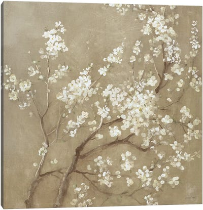 White Cherry Blossoms I Canvas Art Print