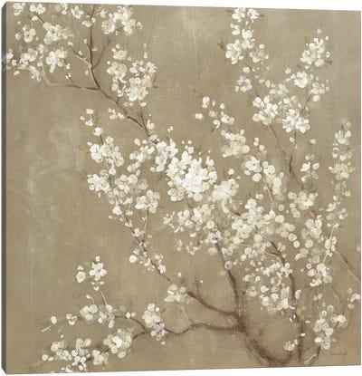 White Cherry Blossoms II Canvas Art Print