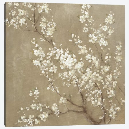 White Cherry Blossoms II Canvas Print #WAC4354} by Danhui Nai Canvas Artwork
