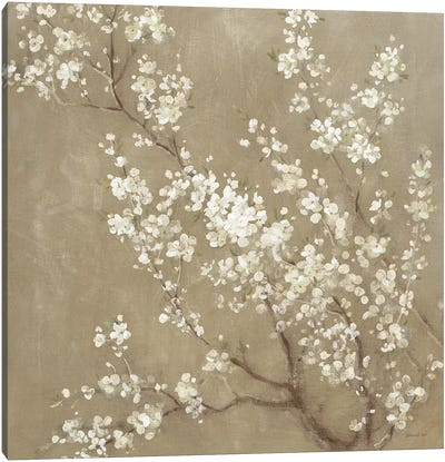 White Cherry Blossoms II Canvas Art Print