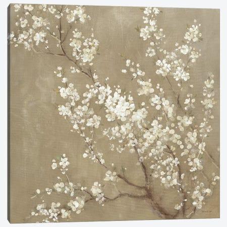 White Cherry Blossoms II Canvas Print #WAC4354} by Danhui Nai Canvas Artwork