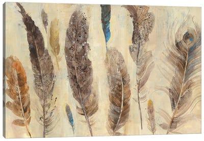 Feather Study Canvas Art Print