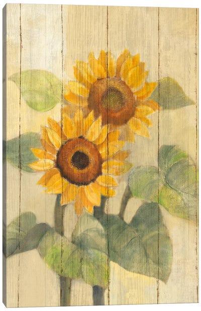 Summer Sunflowers I Canvas Art Print