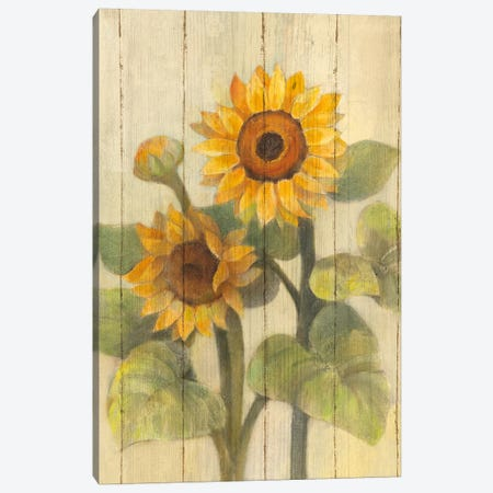 Summer Sunflowers II Canvas Print #WAC4386} by Albena Hristova Canvas Art Print