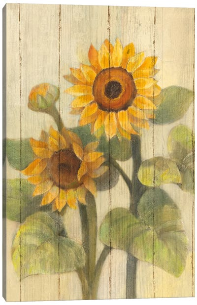 Summer Sunflowers II Canvas Art Print