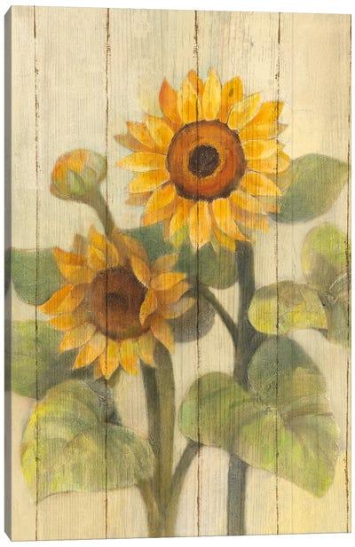 Summer Sunflowers II Canvas Art Print
