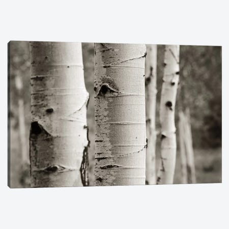 Aspens III Canvas Print #WAC4408} by Debra Van Swearingen Canvas Print