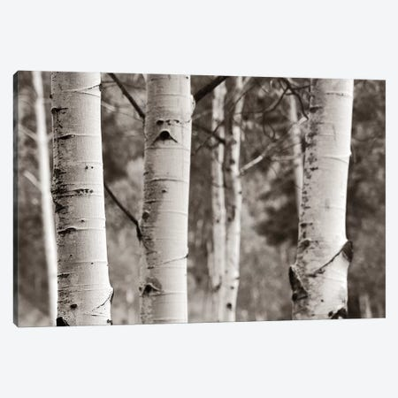 Aspens IV Canvas Print #WAC4409} by Debra Van Swearingen Canvas Print