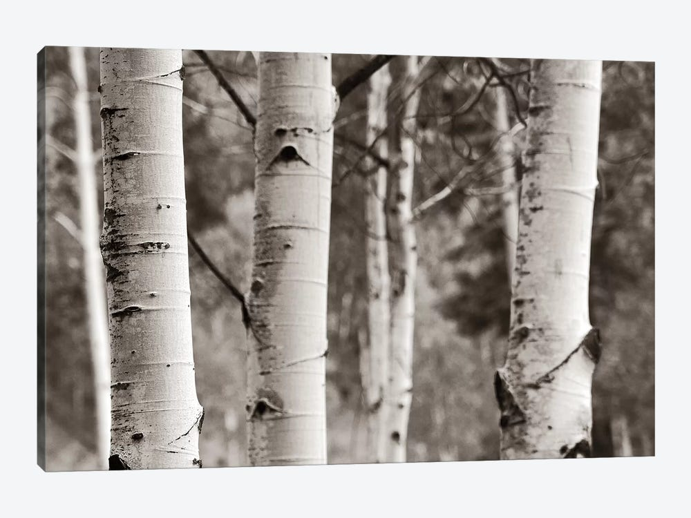 Aspens IV by Debra Van Swearingen 1-piece Canvas Wall Art