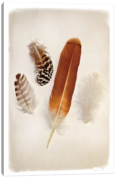 Feather Group I Canvas Print #WAC4411