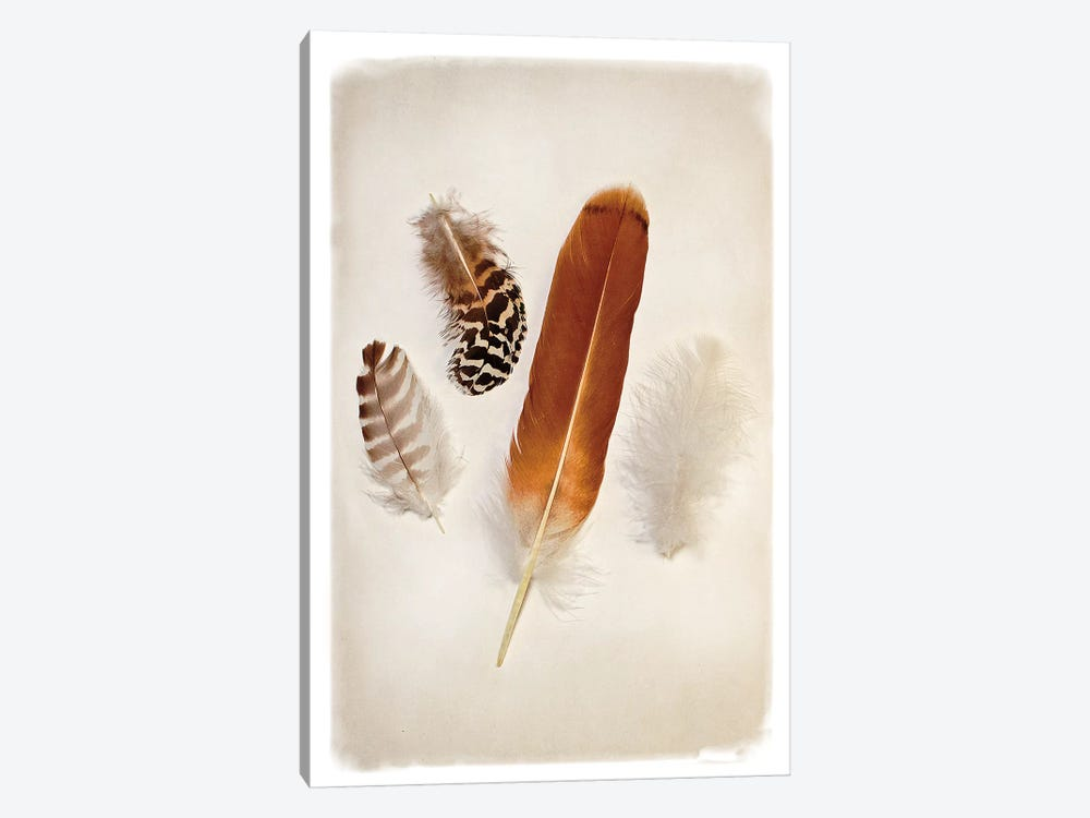 Feather Group I 1-piece Canvas Art Print