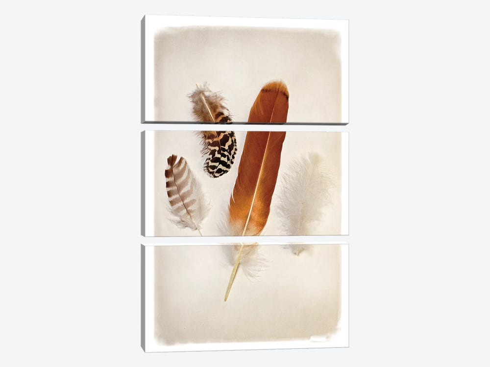 Feather Group I 3-piece Art Print