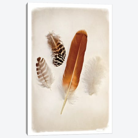 Feather Group I Canvas Print #WAC4411} by Debra Van Swearingen Canvas Artwork