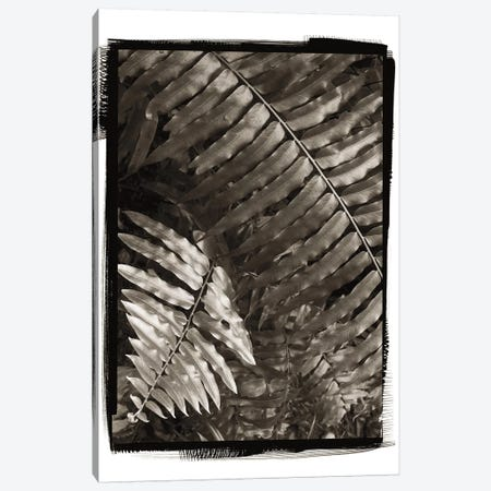Fern I Canvas Print #WAC4413} by Debra Van Swearingen Canvas Wall Art
