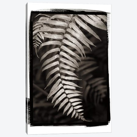 Fern II Canvas Print #WAC4414} by Debra Van Swearingen Art Print