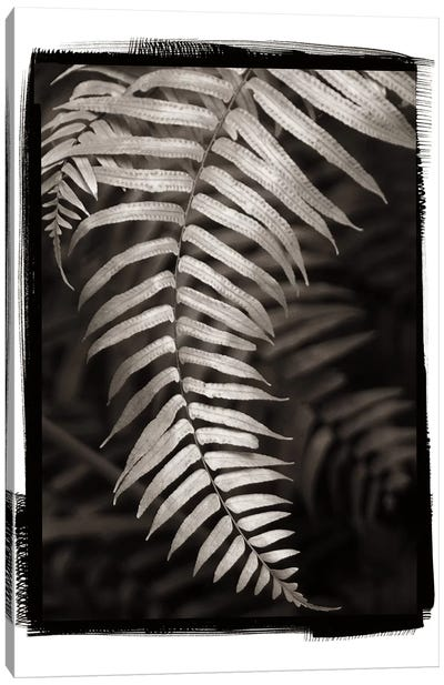 Fern II Canvas Art Print
