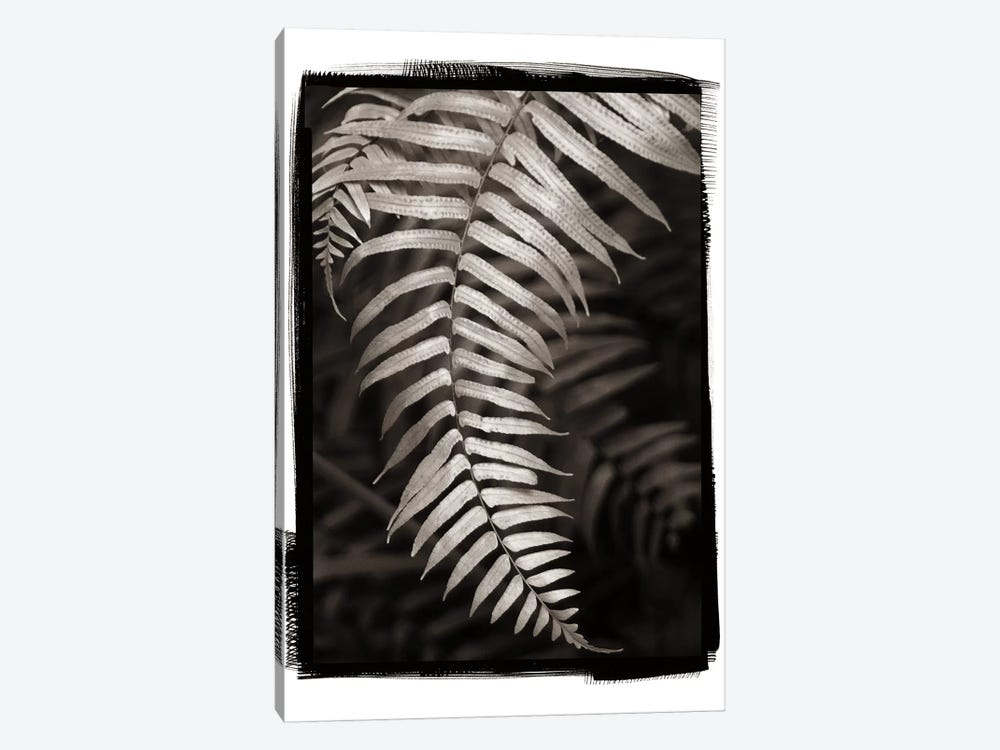 Fern II by Debra Van Swearingen 1-piece Canvas Wall Art